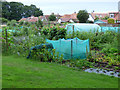 NS3421 : Allotments at Craigie Park by Thomas Nugent