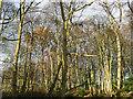 SE2342 : Woodland off Dean Lane  by Stephen Craven