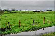 H5371 : Wet at Bancran by Kenneth  Allen