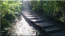 TQ5940 : Steps through the woods by John P Reeves