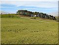 NY8638 : Farmland below Ullsfield Plantation by Mike Quinn