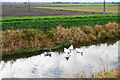 TL5675 : Waterfowl on Soham Lode by Bill Boaden