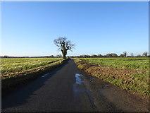 TG1408 : Bawburgh Road, Bawburgh by Adrian S Pye
