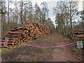 NH5550 : Forestry Operations by valenta