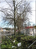SE3321 : A protected row of trees on the police training college site by Christine Johnstone