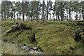 SD6153 : Riverbank and Trees by Bob Harvey