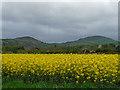 SO5195 : Farmland near Cardington by Stephen Richards