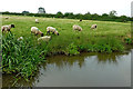 SK2928 : Canalside grazing north-west of Willington in Derbyshire by Roger  Kidd