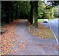 SS9695 : Tree-lined pavement, Pentwyn Road, Ton Pentre by Jaggery