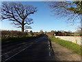 TM4797 : B1074 St Olaves Road, Herringfleet by Adrian Cable