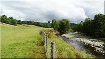 NY3645 : Caldew & Cumbria Way, NE of Welton by Colin Park