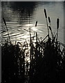 SE2812 : Sunsparkle, Bretton Country Park by Alan Murray-Rust