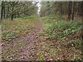 TL9293 : Path between old railway cutting and Conifer block by David Pashley