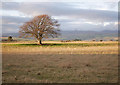 NH5955 : Fields, Brae of Balnabeen by Craig Wallace