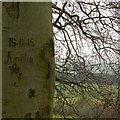 SE2811 : Amelia's Graffito by Alan Murray-Rust