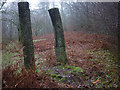 SD3393 : 'The Seer's Well', a sculpture at Grizedale Forest by Karl and Ali