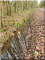SJ9461 : Ditch alongside the former railway near Rudyard Lake by Stephen Craven