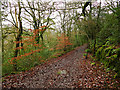 SJ9458 : Footpath through the wood by Stephen Craven