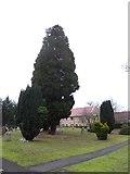 TQ0165 : Holy Trinity, Lyne: churchyard (X) by Basher Eyre