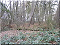 SO8891 : Himley Wood View by Gordon Griffiths