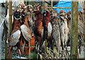 NX6865 : Pheasants at Bellymack Farm by Walter Baxter