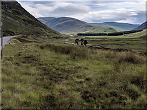 NO1485 : Glen Clunie and the A93, looking south by Rob Purvis