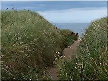 NU2422 : Path through the dunes at Embleton Bay by Mat Fascione