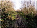 SO0102 : Muddy track through woodland, Cwmbach by Jaggery