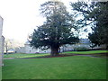 SJ1355 : Yew tree at Llanfair church by Eirian Evans
