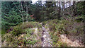SH7024 : A right of way footpath crossing a forestry road in Cwm Camlan by John Lucas