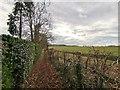 TQ0751 : Footpath near Jeffries Road by James Emmans