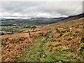 S7943 : Hillside Track by kevin higgins