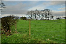 H5572 : Trees on a hill, Mullaghslin Glebe by Kenneth  Allen