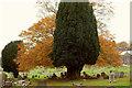 SX9066 : Trees, Torquay Cemetery by Derek Harper
