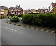 ST3090 : Evergreen corner in Malpas, Newport by Jaggery