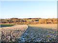 NZ3334 : Stubble in field alongside unharvested crop by Trevor Littlewood