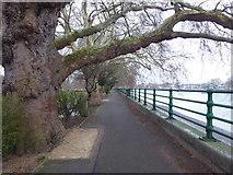 TQ2475 : Thames Path alongside Bishop's Park by Marathon