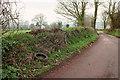 SX9075 : Tyred hedgebank, Humber by Derek Harper