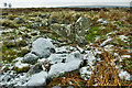 NZ5911 : Chambered Cairn, Great Ayton Moor by Mick Garratt