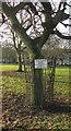 SE3155 : The Fox oak, The Stray by Derek Harper