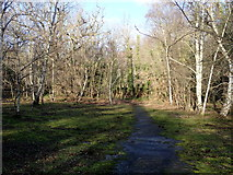 SJ3654 : A walk through the woods by Eirian Evans