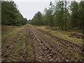 TF7705 : Track in Deadman's Plantation by Hugh Venables