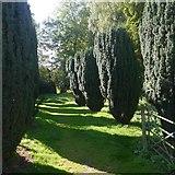 NN8666 : Cypress avenue, St Bride's Church by Richard Webb