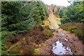NT3437 : Hill path on Pirn Craig by Jim Barton