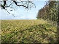 NZ2646 : Field edge above Stank Lane by Trevor Littlewood