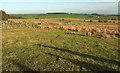 SE2350 : Rough grazing near Napes Hill by Derek Harper