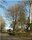 SE2853 : Harlow Pines, Harrogate by Derek Harper