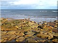 NZ3377 : Coastal rocks at Seaton Sluice by Oliver Dixon