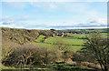 NZ3341 : Wooded slope below Sherburn Hill by Trevor Littlewood