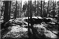 NN8369 : Glen Banvie Wood by Richard Webb
